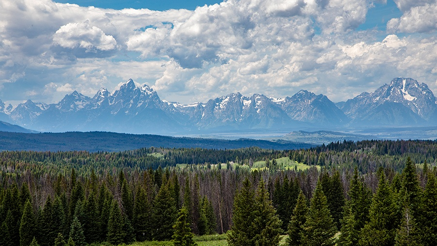 forest of fir trees stretching several miles towards the Grand Teton Mountains in the distance