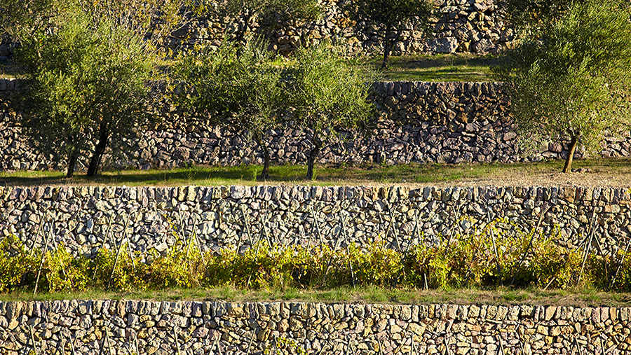 Trees and grape vines sitting atop cascading stone wall terraces